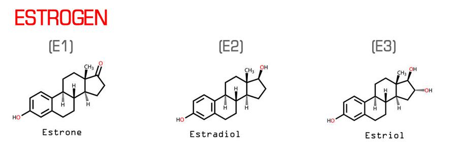 Estrogen hormoni podstiču rak dojke i prostate.