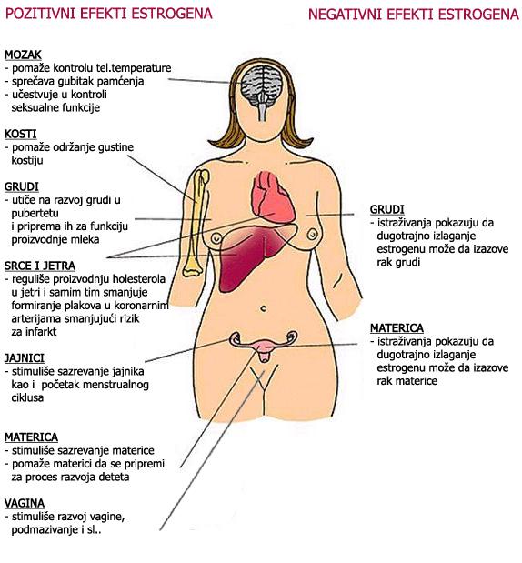 Estrogen hormoni podstiču rak dojke i prostate