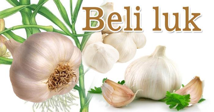 Herbarijum - Sirova biljna hrana leči teške bolesti. Beli luk. Antioksidans.com