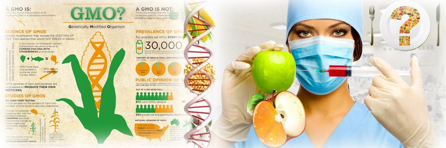 GMO genetski modifikovani organizmi uzrok su genskim mutacijama i promenama čak i u potomstvu. GMO hrana pospešuje razvoj tumora, kancera i teških bolesti.
