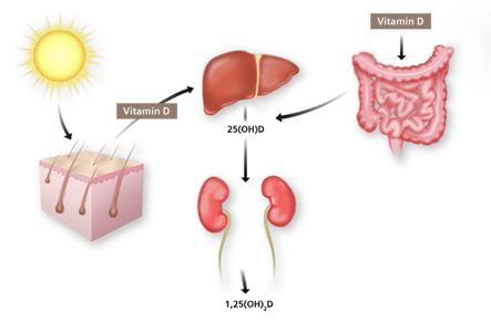 Vitamin D sprečava razvoj raka i pomaže kod lečenja malignih bolesti (rak, tumor, kancer) i pomaže pravilnu apsorciju kalcijuma. Sprečava i rak kože.