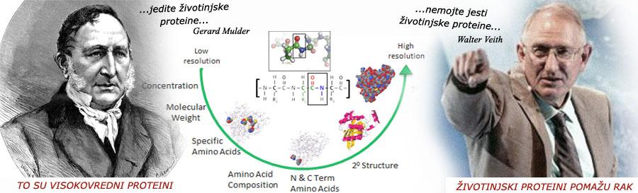 Proteini pomažu rak - Lečenje raka sirovom biljnom hranom. Alternativa. Sirova hrana. Belančevine. Meso, mleko i jaja ubrzavaju razvoj tumora.