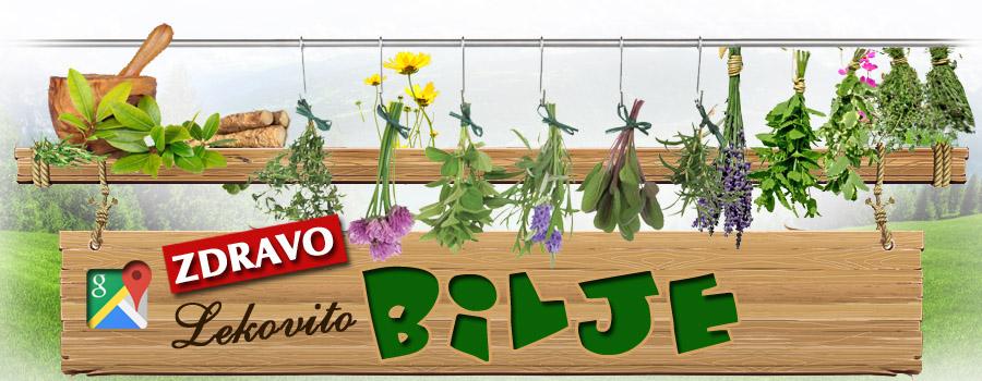 Lekovito zdravo bilje - samoniklo šumsko bilje ima jaka lekovita svojstva